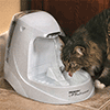 Cat Water Drinking Fountains