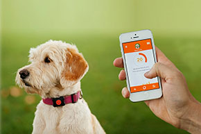 5 of the Hottest Smart Pet Products